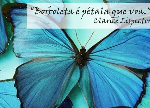 borboleta-voa