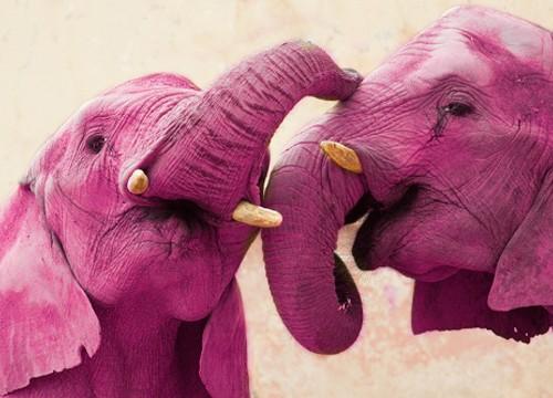 elefantes-cor-de-rosa-africa